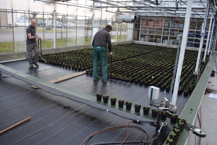 Producteur de plantes - 1