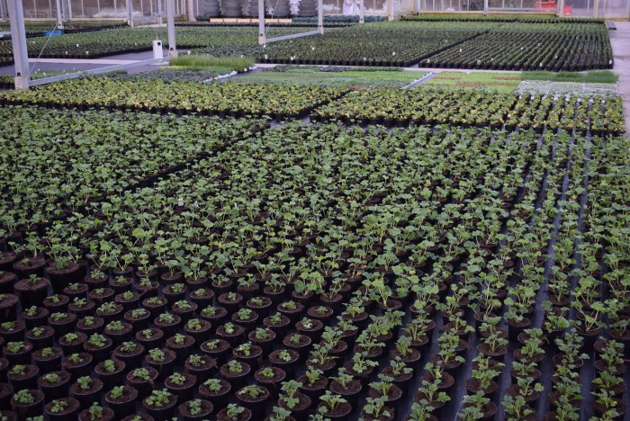 Producteur de plantes - 3