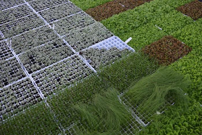 Producteur de plantes - 4