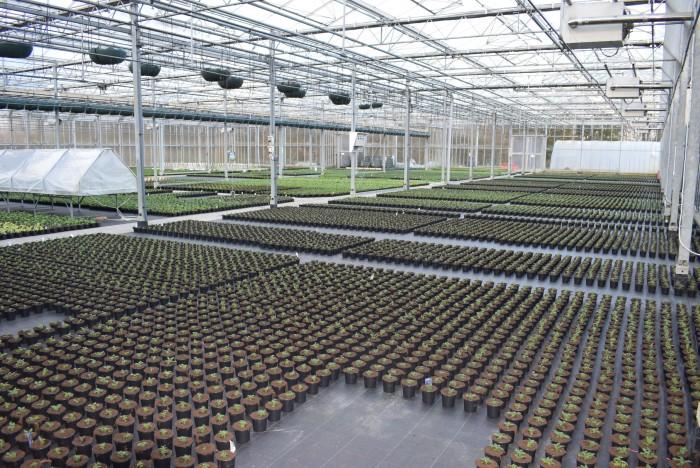 Producteur de plantes - 6