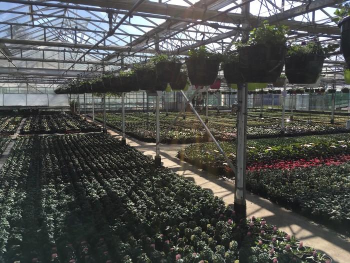 Producteur de plantes - 12
