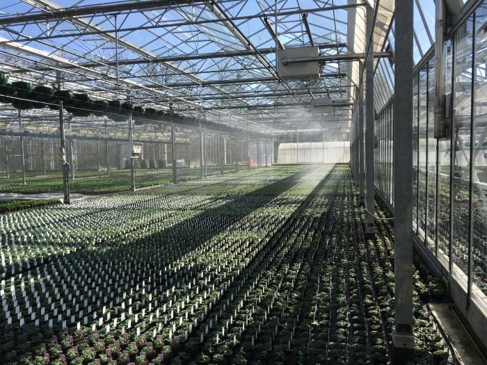 Producteur de plantes - 13