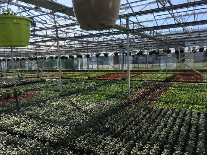 Producteur de plantes - 14