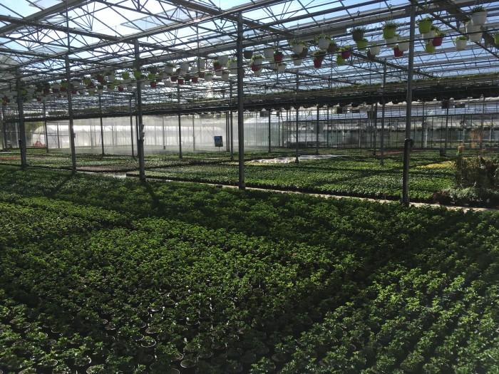 Producteur de plantes - 15
