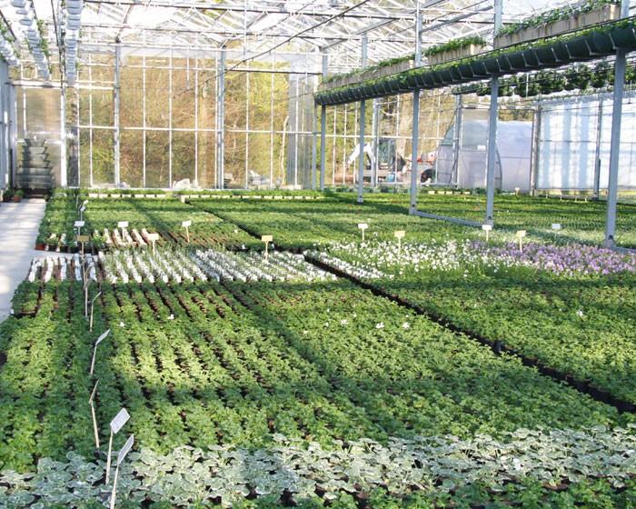 Producteur de plantes - 19