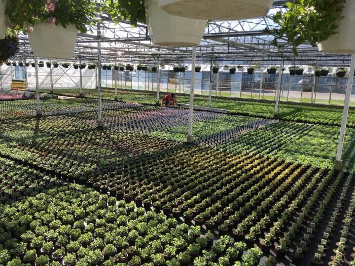 Producteur de plantes - 21