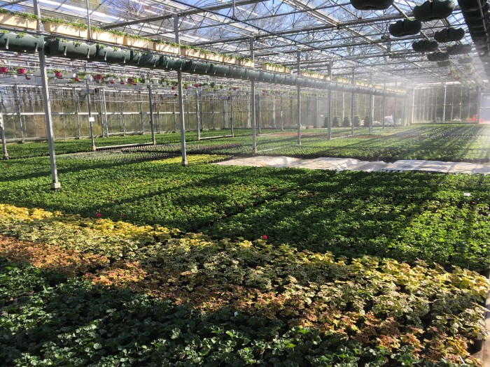 Producteur de plantes - 22