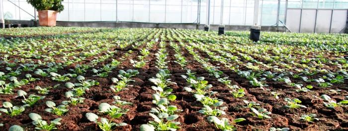 Producteur de plantes - 23