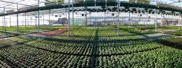 Producteur de plantes - 24