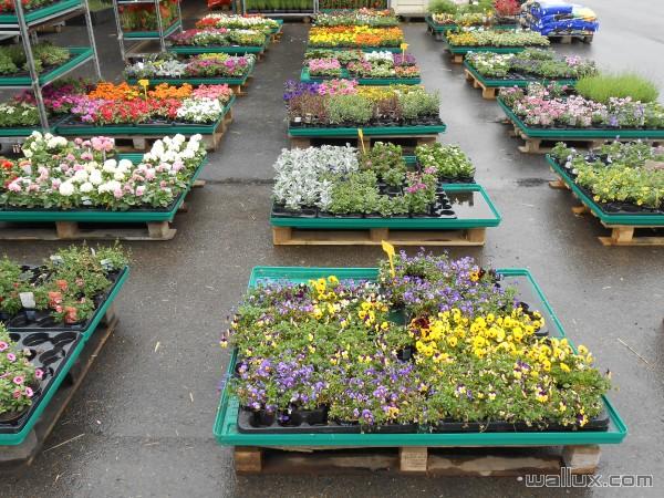 Jardinerie - 8