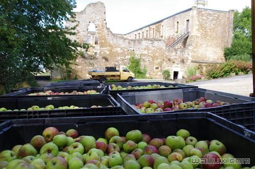 Notre jus de pommes - 2