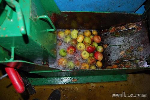 Notre jus de pommes - 5