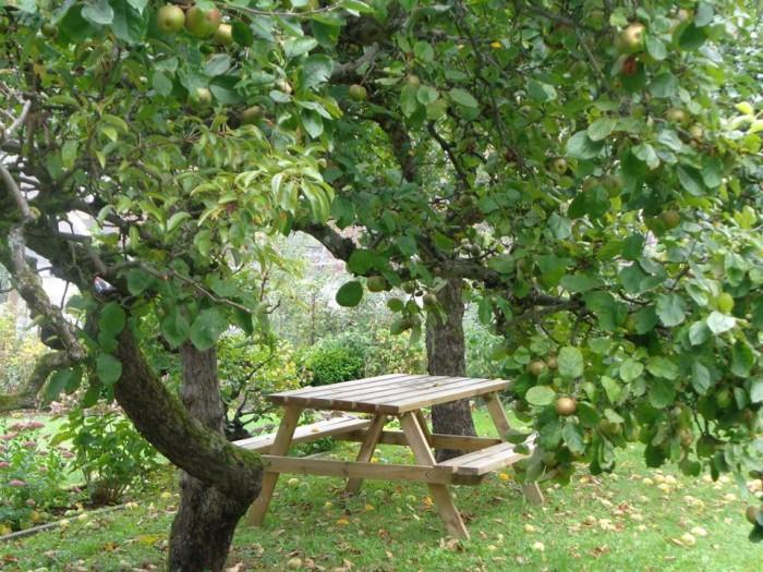 Table pique-nique sous un pommier