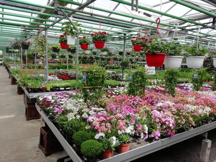 La jardinerie - 5