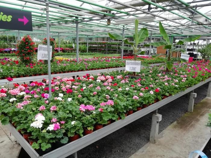 La jardinerie - 4