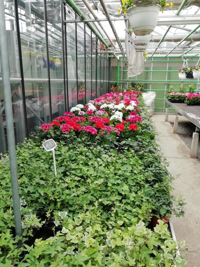 La jardinerie - 11