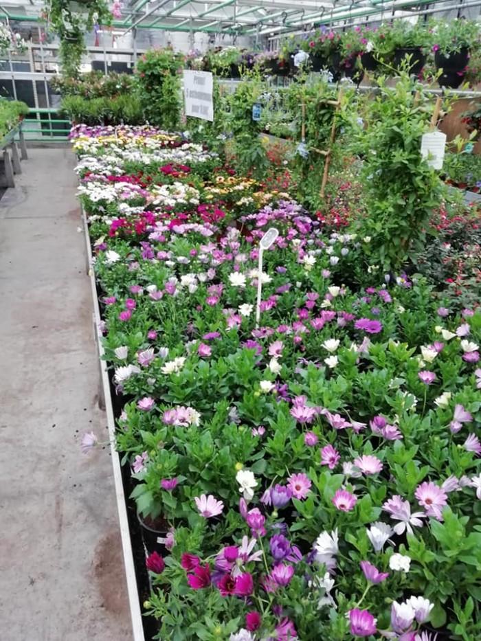 La jardinerie - 13