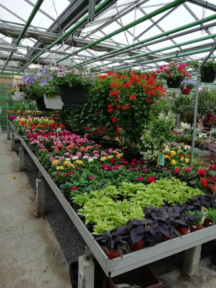 La jardinerie - 19