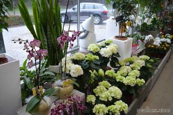 La jardinerie - 2