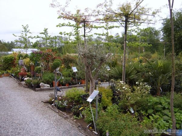 Vaste collection de plantes Pépinière
